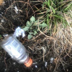 Photo of a plastic bottle on the ground next to weeds